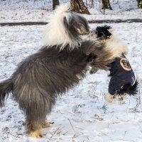девочки играют - поймала!!!! :: Лариса Батурова