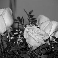 Черно-белый вариант прошлых лет.... :: Tatiana Markova
