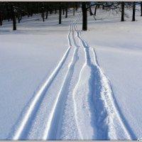 По нетронутой снежной целине :: Андрей Заломленков