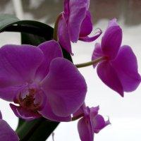 Январь,цветы и снег... :: Тамара (st.tamara)
