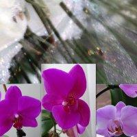Цветущий Новый Год... :: Тамара (st.tamara)