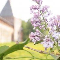 Весна в Смоленске :: Жанна Устенная