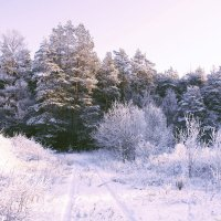 Зимний лес :: Olga Kozlova