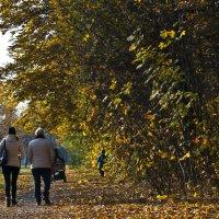 Осень :: Ольга Винницкая (Olenka)