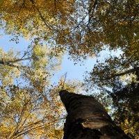 лес :: Олег Сливанков