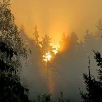 Волшебный миг утра :: Светлана
