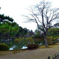 Япония, Токио :: Марина Корнова
