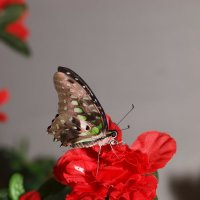 бабочка на цветке :: Олег Савицкий