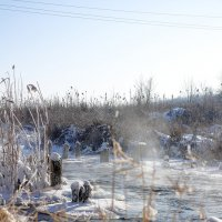 мороз :: Юрий Гайворонский