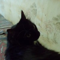 Кошка Глафира! :: Светлана Калмыкова