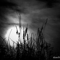 Озёрный этюд с солнцем :: Andy Zav