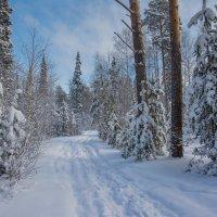 Голубая зима :: vladimir