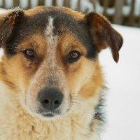 Лучшее слово из Ваших уст для собаки - НА...)) :: Владимир Хиль