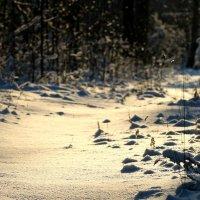 зимние настроение :: Anrijs Slišāns