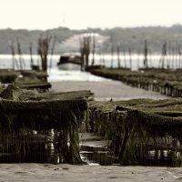Устричные фермы.Бискайский залив,Франция. :: Облачко *