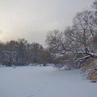 Нара на закате. :: Ирина Нафаня