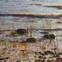Осень у берега :: Виталий