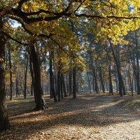 """Осень в парке """"партизанской славы"""" :: Владимир Бровко"""