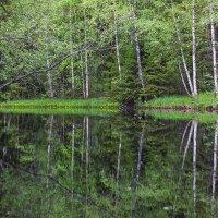 Зеркало реки Тохмайоки. :: Николай Т