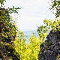 Ворота в лес :: Евгения Кузнецова
