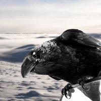 Погоды нынче холодные. :: Юрий Харченко