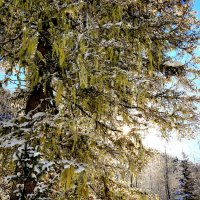 Зимой на Хамар-Дабане :: Владимир Кузьмищев