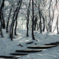 Зимняя тропа :: Darina Mozhelskaia