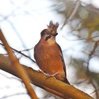 ветер-стилист) :: linnud