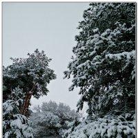 зима :: ВладиМер