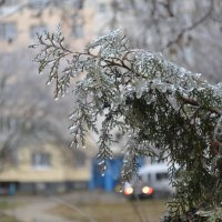 Ледяной дождь :: splin11