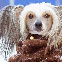 Зимняя прогулка :: Lika Shakhmatova