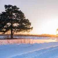 Природа Сибири :: Ольга Рав