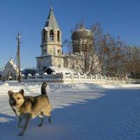 По своим собачьим делам :: Валерий Чепкасов