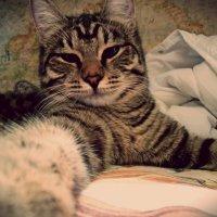 Селфи кошки - милой крошки! :: dristuida .