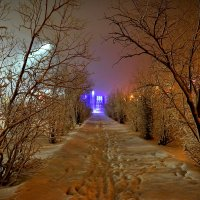 В зимнем парке... :: Витас Бенета