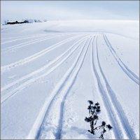 Среди снежных полей :: Валерий Талашов