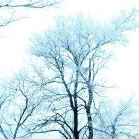 Зимой у костра :: Наталья Д