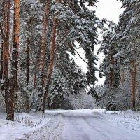 Уже накатана дорога... :: Лесо-Вед (Баранов)