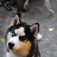Собак :: Владимир Шамирзаев