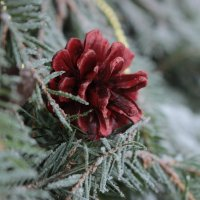 лес :: Евгения Досина