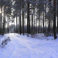 Зимний лес :: Татьяна Ракутина