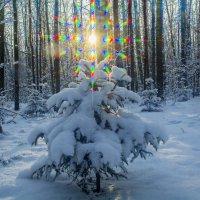 На Рождество в лесу :: Василий Аникеев