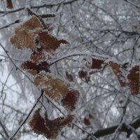 мороз рисует свой узор... :: helga 2015