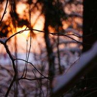 Зимний вечер в лесу :: Mavr -
