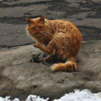 Злой кот :: Anastasia М