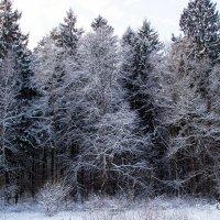 Зимний лес :: Оксана Пучкова