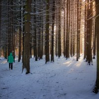 Рождественский лес :: Эльмира Суворова