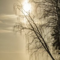 Winter sun :: Dmitry Ozersky