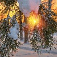 Краски зимнего леса... :: олег