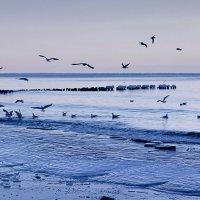 Голодные чайки :: Женечка Зяленая